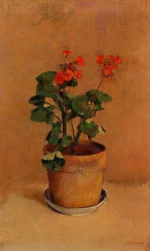 A Pot Of Geraniums