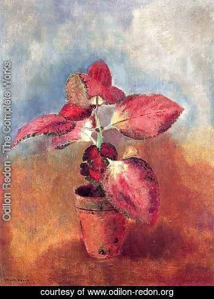 Odilon Redon - Begonia In A Pot